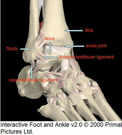 Broken ankle anatomy
